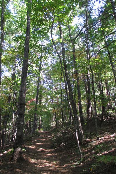 Chestnut Knob Trail - 1,950'