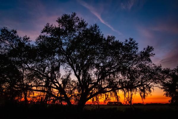 Camp Mack Sunset Tree