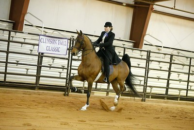 105.5-Gaited Stake-Open