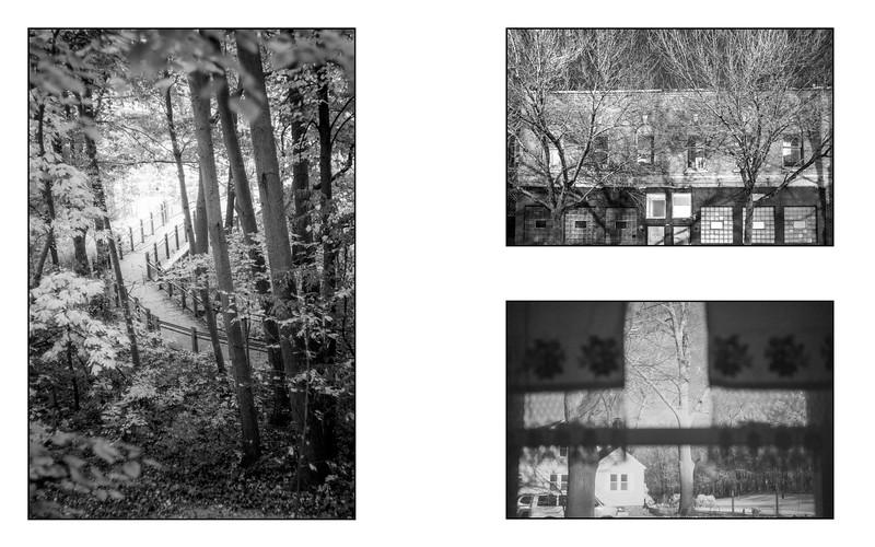 Forest Within_saddle_11.jpg