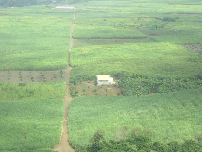 010_Terre fertile couverte de cannes à sucre. 89% des terres arables et 36% de la superficie de l'île.JPG