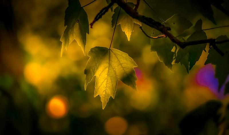 The Magic of Light-119.jpg