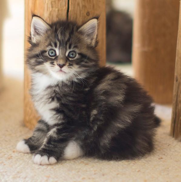 Kittens295.jpg