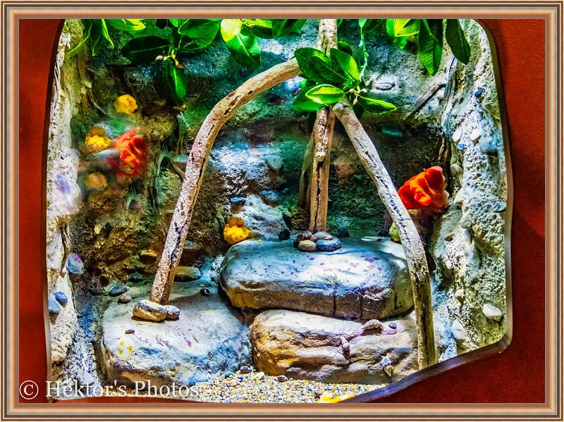 acquarium-8.jpg