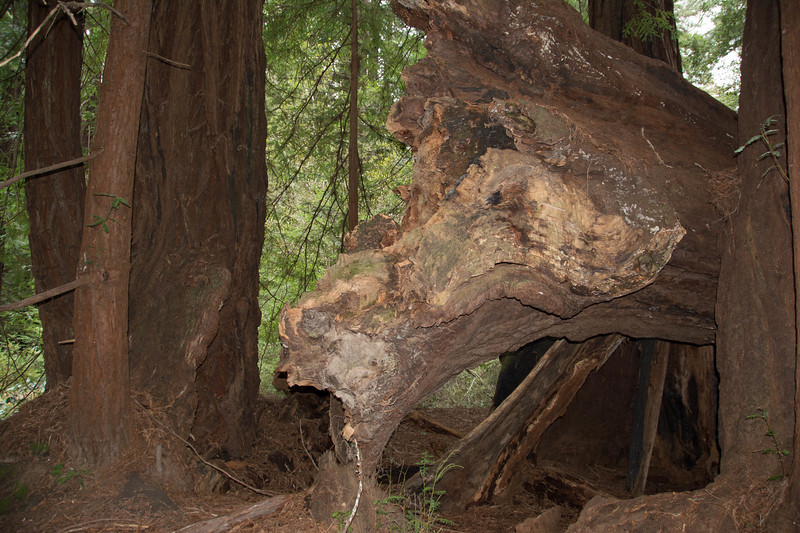 Redwood-12.jpg