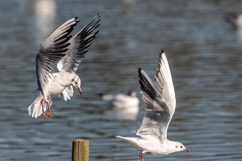 Gull_Post-57.jpg