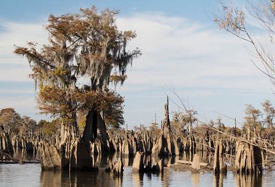 Dead Lakes Florida