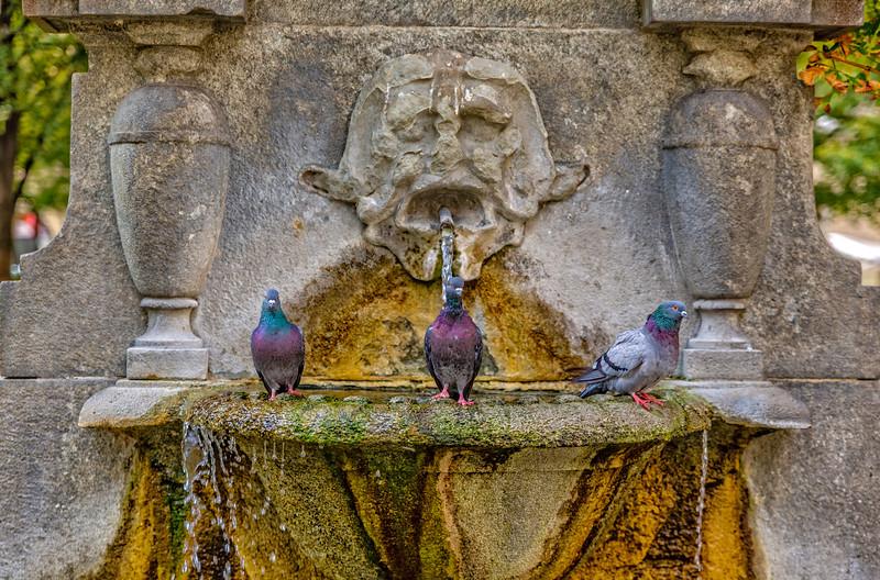 3 pigeons