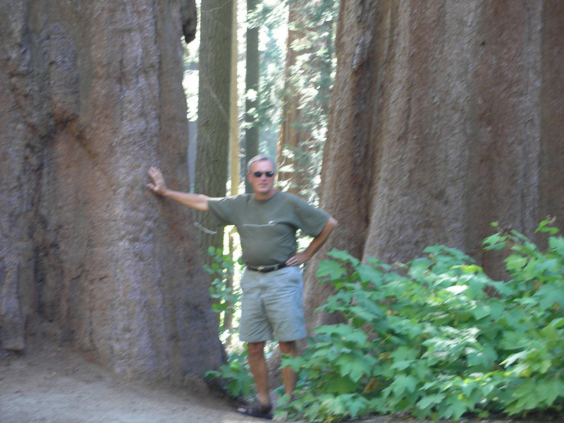 Dwaine at base of giant redwood