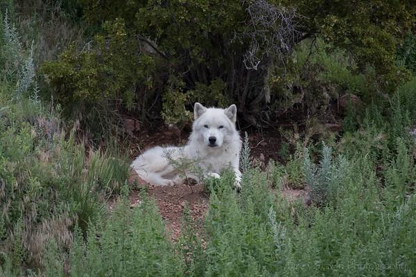 Mission Wolf 8/3/2021