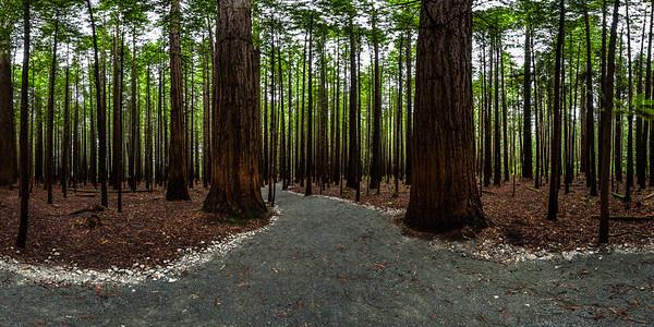 Redwood Memorial Grove Track