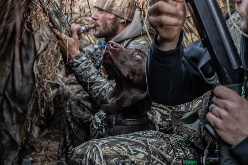 Hooch in the blind staying warm