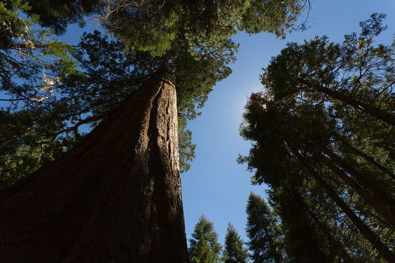 Sequoia_0254.jpg