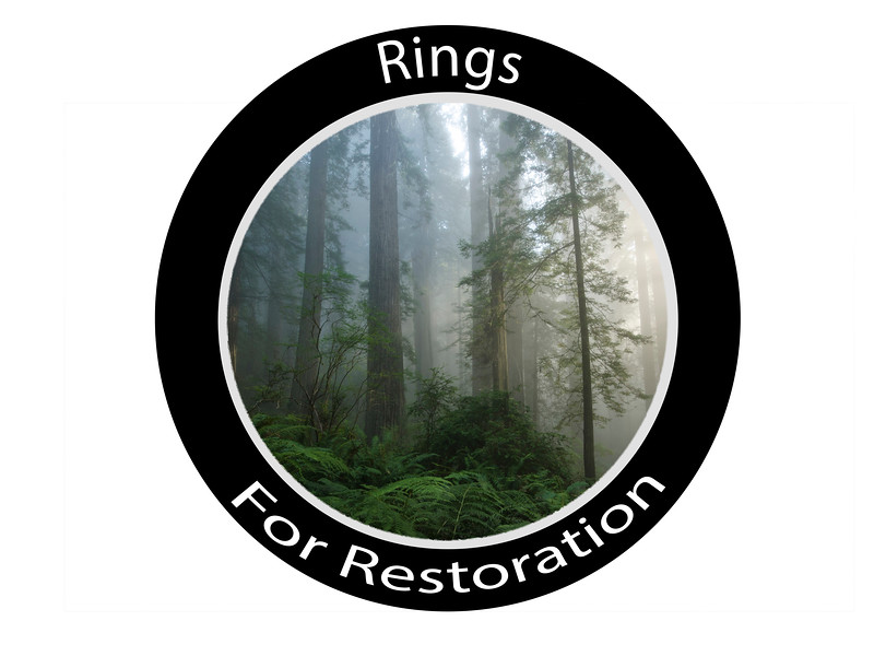 ringsforrestoration2.jpg