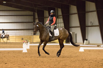 Horse 653