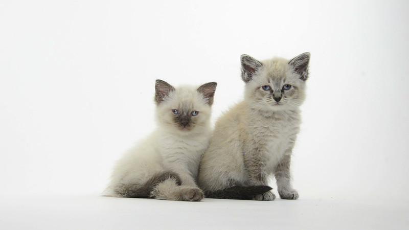 Kitten_17_IS_HD.mov