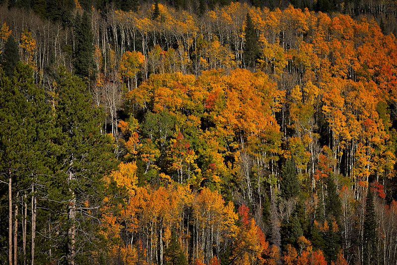 Enjoy the colors of the aspens