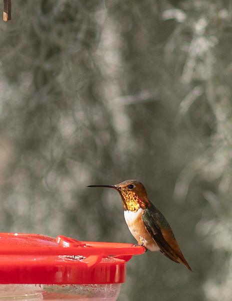 hummingbird-9865.jpg