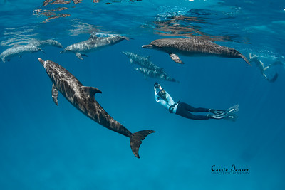 Swim with DOLPHINS expedition: Bimini