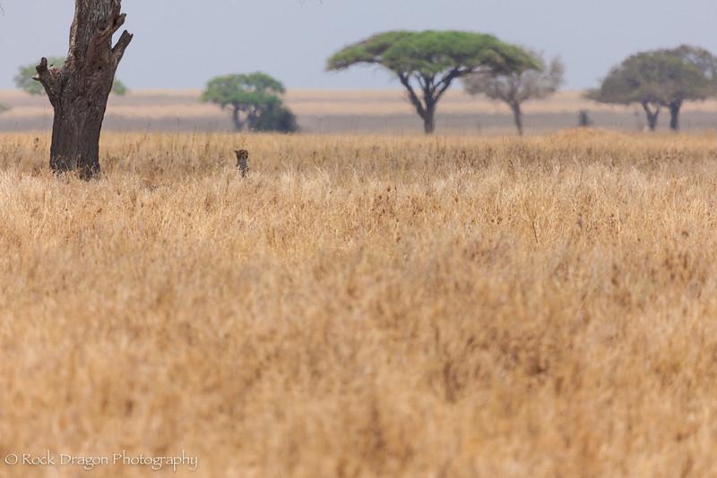 South_Serengeti-43.jpg