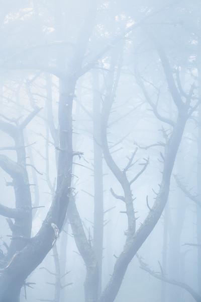 presidio_trees_3_2020_print.jpg
