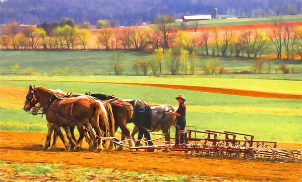 Horses and Mules  of Lancaster