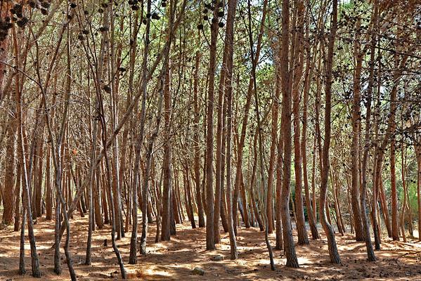 Punta Licosa - cote terre