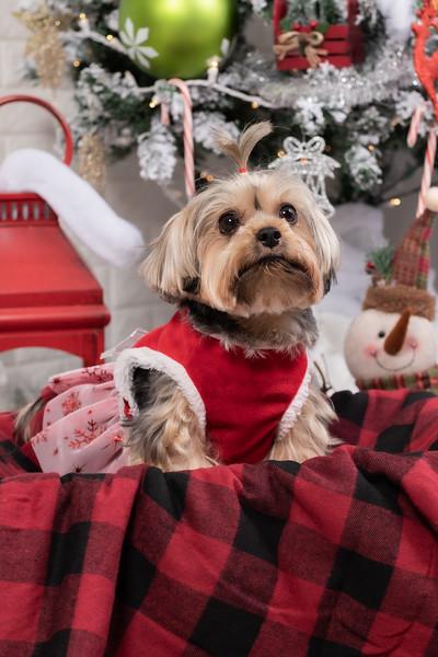 12.10.19 - Leide e Mel's (Mel Pet) Studio Christmas 2019 - -40.jpg