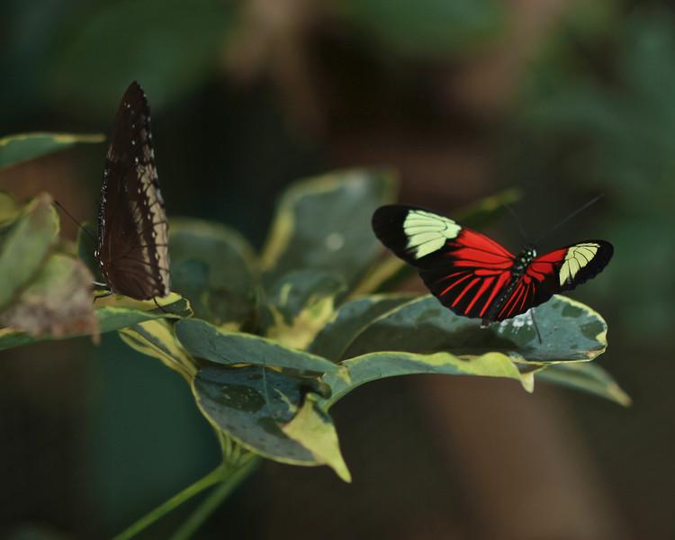 Butterflies Co-op