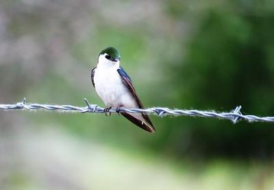 BIRDS E#10