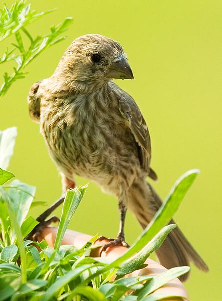 sparrow_1178364500_o.jpg