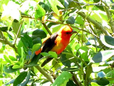 High Island Birds 2012