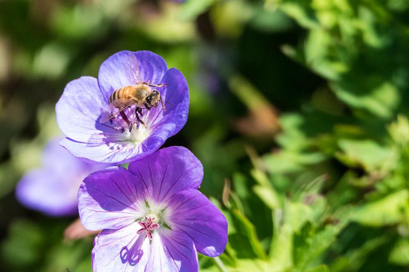 20190722_denver-botanical-garden_038.JPG