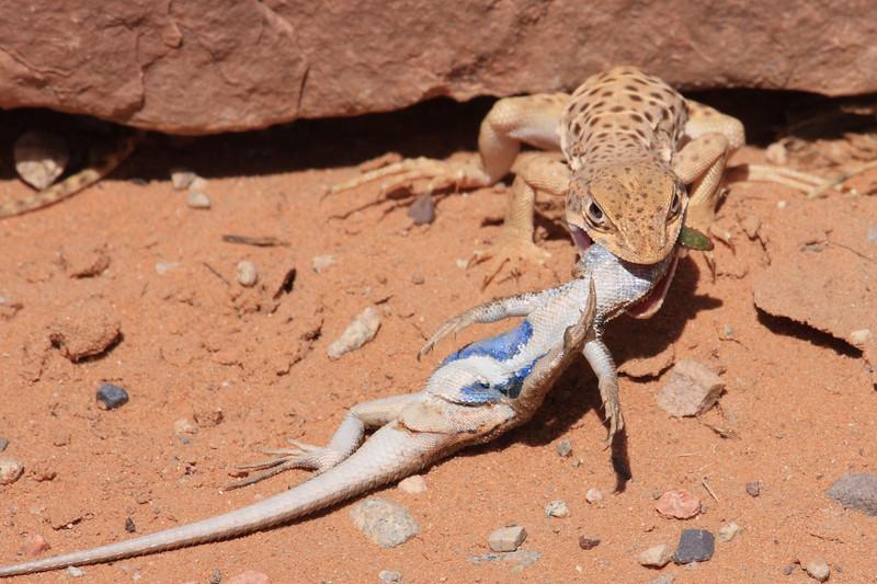 Lizard0001.JPG