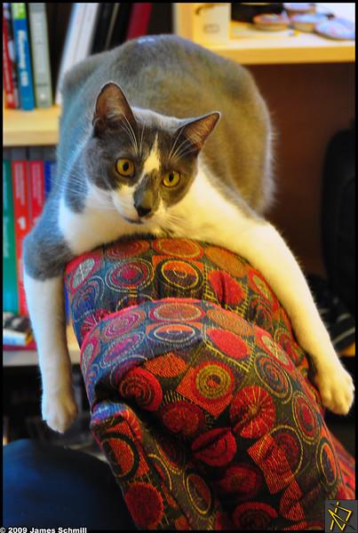 Niko on Chair.jpg