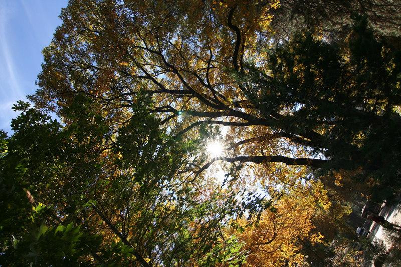 trees and sun.jpg