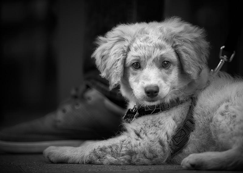 puppymar1317 7.jpg