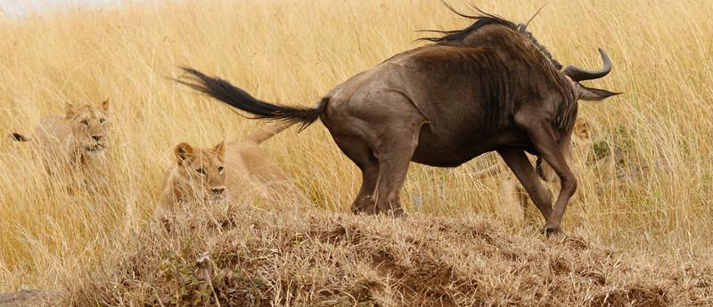 Kenya 2015-07951.jpg