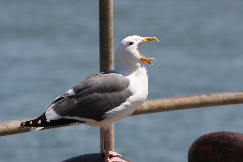 Mr. Seagull was not impressed, and let everyone know what he thought.