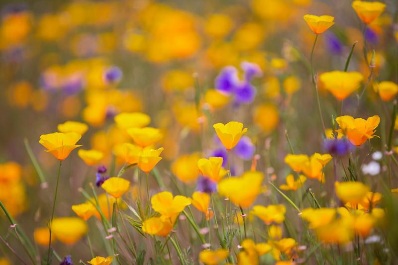 Spring Flowers B-105.jpg
