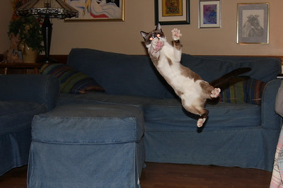 Flying Kitty