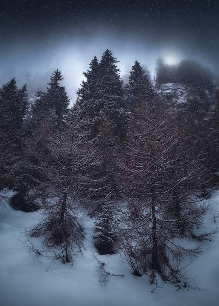 groß-glockner-forest.jpg