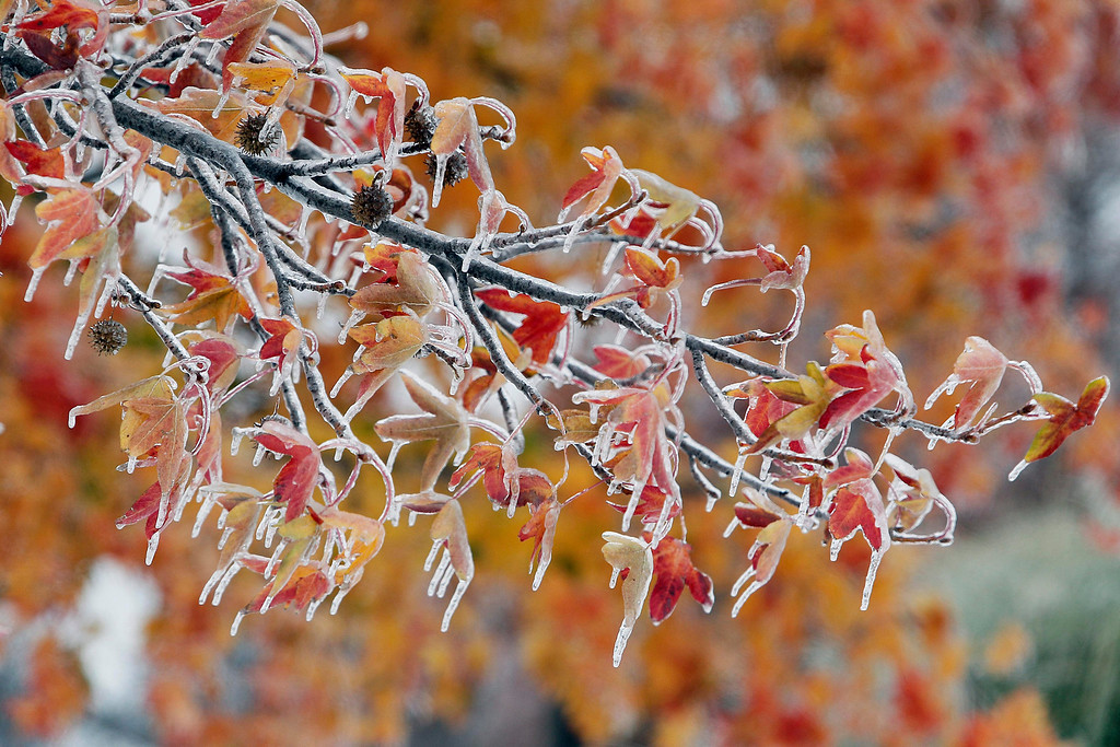 . Fall leaves are covered in a layer of ice at Vandergriff Park in Arlington, Texas, USA, 06 December 2013. A large ice storm causing travel problems and power outages moved through the Dallas, Texas area and across the midwest.  EPA/BRANDON WADE
