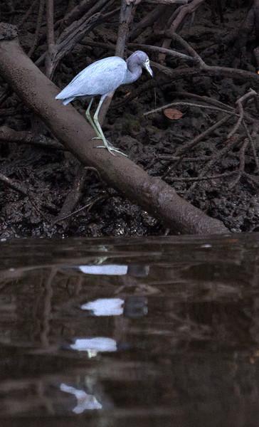 Everglades_090_IMG_0941_Everglades_1.jpg
