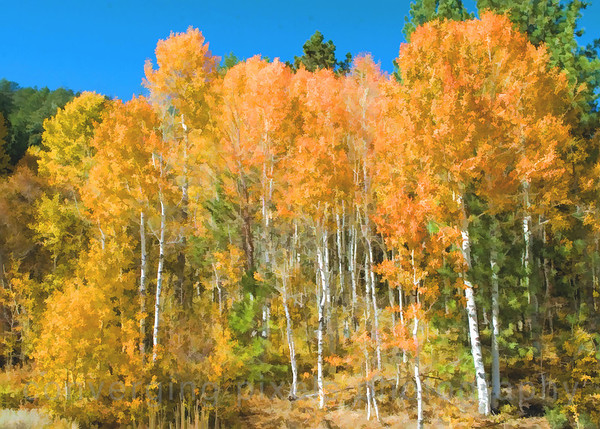 """ #3 "".  Autumn in the Sierras.  1042c"