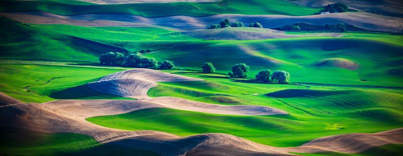 Palouse Panoramas