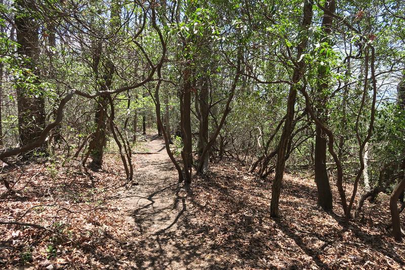 Pinnacle Mountain Trail - 2,900'