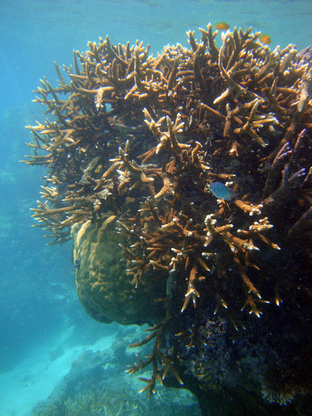 Coral 5.jpg