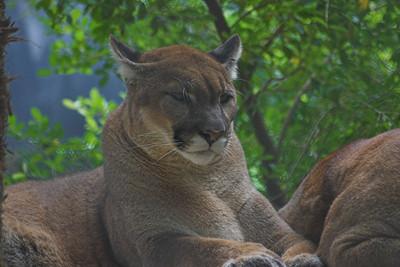Naples Zoo - Sanibel Vacation 2006