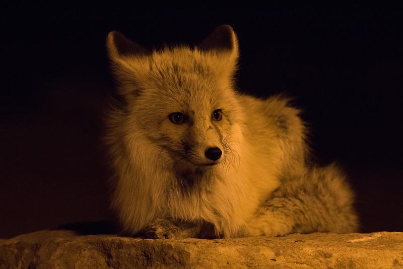 Fox Monument Valley AZ 2020-3.jpg